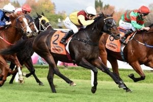 Track a concern for Collett