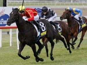 Pretty In Pink lands Scone Listed race win