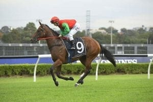 Luck changes for Seasons at Warwick Farm