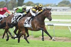 Friday NZ news briefs - James' 3YO in top Derby order