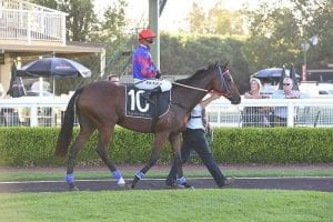 Sofin after stakes win in Lord Mayor's Cup