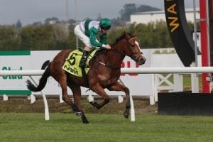 Southern Icon returns from fetlock injury