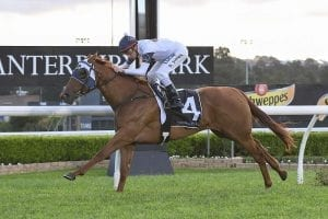 Newnham expects boost from Star Sensation