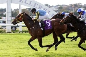 Well-bred stakes winner to stud Group performer