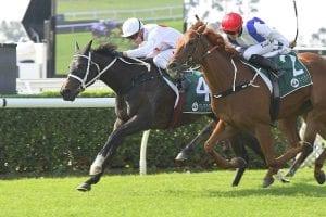 Toryjoy keeps Flying Spur flame flickering