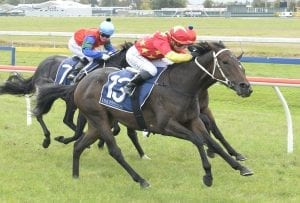 Track has trainer guessing with Van Irving
