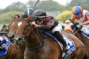 Top mare enjoys smooth Doomben preparation