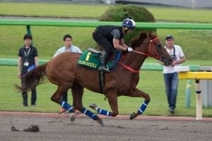 Western Express on track as Size aims a 10th shot at Yasuda Kinen