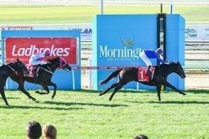 Well-bred Al Khabeer wins on debut