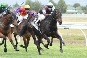 Light winter planned for talented Dolcetto