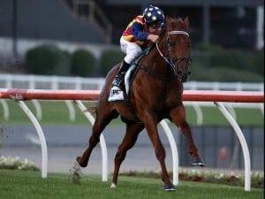 Gallop to decide Flemington run for Nature