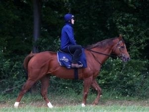 Faultless Royal Ascot lead-up for Warrior