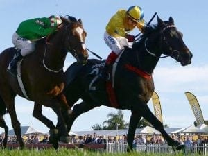 Class tells in Ipswich Cup for Weir