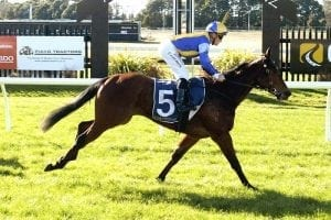 Lady Lira in line for stakes test