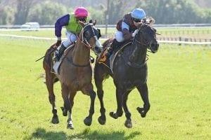 Longchamp out to redeem himself at Hawera