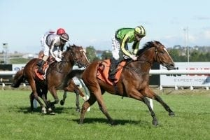 Trainers rate Peaceful's 3YO prospects