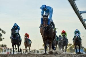 First horses on Hawkesbury Polytrack