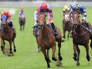 Poignant win for Adkins in Stayer's Cup