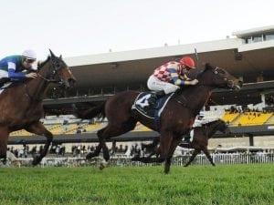 Manolo Blahniq on track for Queensland