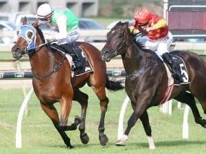 Calanda gets things to suit in Moreton Cup