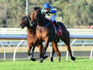 Tarzan conquers rivals in Lightning Hcp