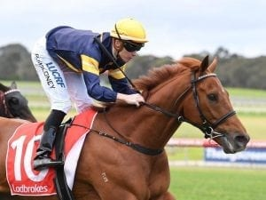 Import Hang Man adds Sandown win to record