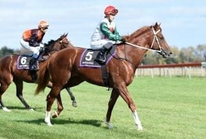 Plain sailing for stakes contender