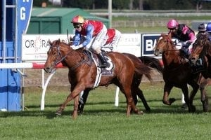 Improvement continues for exciting Te Toro