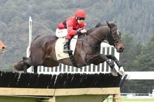 Hurdler gives weight and a beating to rivals