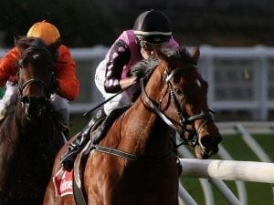 Miss Leonidas scores big win at the Valley