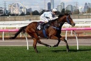 Daring Flemington victory for Choysa