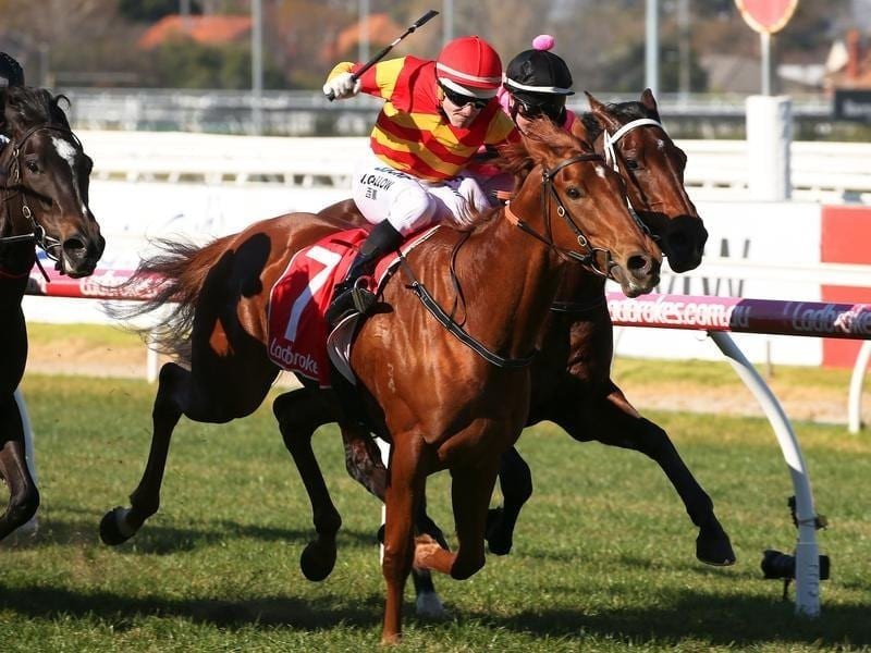Jockey Noel Callow rides Magnesium Rose