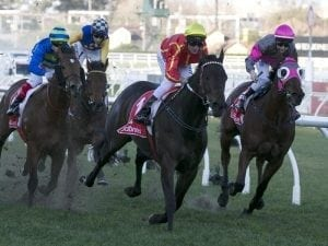 Voodoo Lad wins G3 Monash Stakes in style