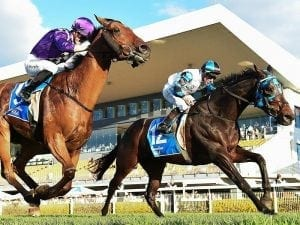 Ruling Dynasty continues Queensland run