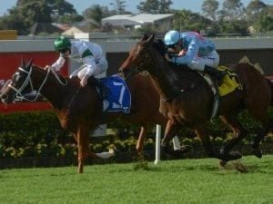 Waller after more winter black-type in Qld