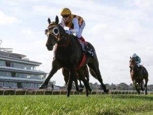 Williams steers Mintha to Flemington win