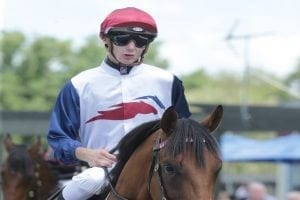 Trainer has high hopes for Gallagher