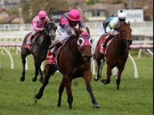 Inn Keeper on target for first stakes test