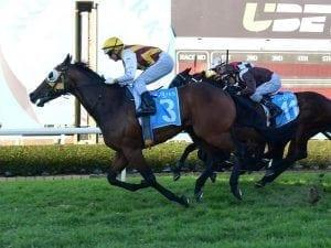 Tony Gollan breaks his Brisbane metropolitan record at Gold Coast