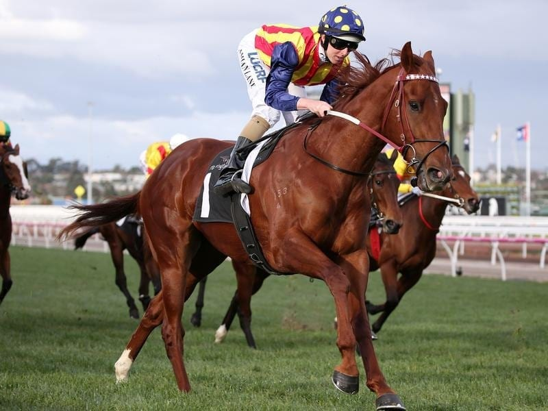 Doomben 10000 Betting | Horse Racing Tips & Odds