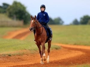 Redkirk Warrior out to bounce back