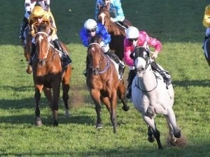 Albumin going for hat-trick at Rosehill