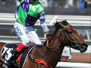 Aurie's Star return likely for I Am A Star