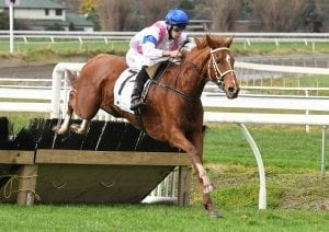 Hurdle features beckon emerging mare Iffitel