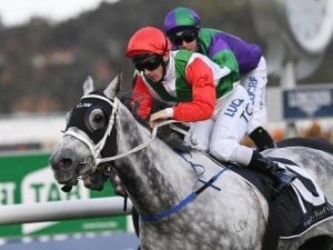 Sir Bacchus gets Winter Stakes start