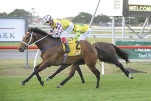 Well-performed stayer to get another chance on better tracks