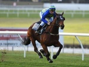 Jameka gallops between races at Sandown
