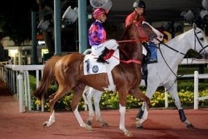 Solomon's Bay key to Moreira's title defence at Happy Valley