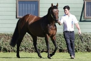 Stallion returns to Highview