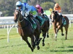Tarka defies betting drift to win